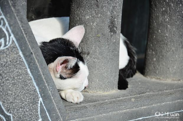 [Cat]台北士林慈誠宮。古寺有貓