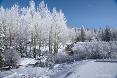 My Frosty World (Aspenbreeze) Tags: winter snow creek forest woods colorado frost hoarfrost bluesky frosty grandmesa vaportrail aspentrees firtrees woodedarea aspenbreeze fleursetpaysages flickrstruereflection1 flickrstruereflection2 flickrstruereflection3 masterclasselite