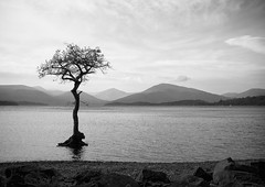 Lonesome tree (dasymington) Tags: trees mist beach water stones shingle hills layers lochlomond millarochy