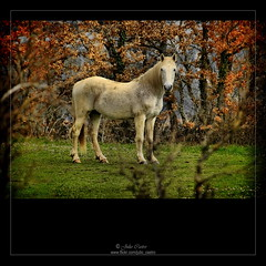 Ailanes (Burgos) (Julio_Castro) Tags: horse mountain field caballo nikon campo nikond200 impressedbeauty montraña