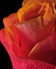 Petals and Textures