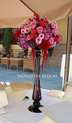 Wedding Florist Los Gatos CA, Purple Centerpieces (Signature Bloom) Tags: dahlia wedding decorations red party flower floral rose for design purple designer burgundy events lavender sanjose mum mauve designs florist vendor siliconvalley hydrangea bridal centerpiece decor peninsula southbay ideas amaranthus losgatos weddingflowers weddingphotos arrangements hotpink floraldesign sanjoseca losgatosca specialevents centerpieces weddingideas bridalflowers weddingdecorations corporateparty 95030 floraldesigner flowerdesign corporateevents partyflowers 95121 weddingflorist purplewedding weddingfloral weddingvendor flowersforwedding purplecenterpieces sanjoseweddingflowers signaturebloom wwwsignaturebloomcom sanjoseweddingflorist losgatosweddingflorist bridalflorist weddingfloristlosgatosca weddingflowerslosgatosca weddingfloristsanjoseca losgatoscaflorist purplearrangements