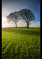 Duo... (Chrisconphoto) Tags: tree canon sigma elements foreground crank sidelight goodlight billinge