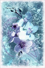 Iceflower (~Yasmina Siamendes~) Tags: christmas pink schnee winter light white abstract cold flower art texture ice digital photoshop painting lights frozen view arte crystal kunst hell award fave sl digitalpainting secondlife freeze views brushes faves 100 cubes blau effect cristal weiss malen effekt icecrystal iceflower gefrohren zeichnen kristalle eisblume eiskristalle frozenflower icecristal ringofexcellence doubleringofexcellence yasminasiamendes eiseffekt gefrohrenes