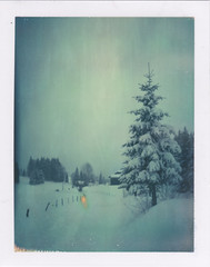 Nightfall (emilie79*) Tags: snow firtree polaroid180 iduvfilm