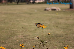 Butterfly1 (RajivSinha Photography) Tags: