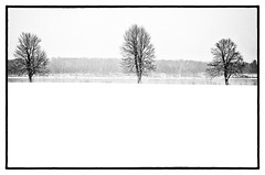 Three (lynn.h.armstrong) Tags: camera trees sky bw white snow ontario canada black art water st forest silver lens geotagged photography photo lawrence interesting mac aperture nikon long flickr afternoon zoom south wb images lynn h parkway getty pro nik nikkor armstrong stormont vr licence afs request dx sault attribution ingleside 2011 ifed 18200mm f3556 noderivs vrii efex d7000 lynnharmstrong