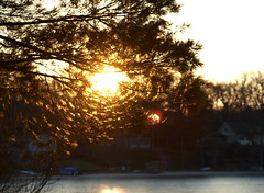 Sunshine whorls . . . (Dr. Farnsworth) Tags: winter sunset white lake reflection tree ice pine mi branches westlake needles whorls january2012