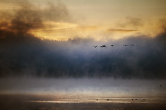 Lake 12of12 (sparth) Tags: morning lake birds fog landscape washington december flight foggy lac telephoto redmond series vol usm washingtonstate brouillard marymoor lakesammamish ef70200mm 2011 f4l 12of12 ef70200mmf4lusm sammaish 5dmkii marymoorlake