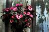72429_TADEU NASCIMENTO_MORRETES PARANA (Tadeu_Nascimento) Tags: paraná janelas vegetação morretes flôres tadeuonascimento
