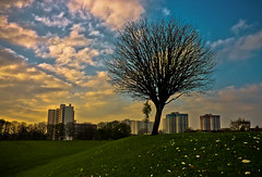 Urban Escape (Photo Gal 2009) Tags: sky cloud sun tree grass bristol flats housing greenspace bartonhill socialhousing netham bartonhillflats nethampark nethamparkbristol greenspacebristol