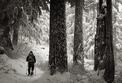 First Tracks (Scott Withers Photography) Tags: oregon columbiarivergorge larchmountain canon50mmf12l scottwithers
