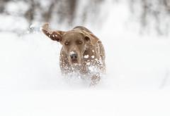 36-Bygd_for_fart-Stein_Inge_Meland (TrondhjemsKameraklubb) Tags: vinter ute saga januar snø 2010 sn sn¿ fritttema