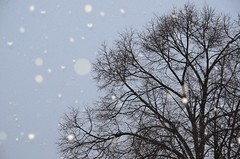 Mrjad valged ritsakad (anuwintschalek) Tags: schnee winter white snow tree home snowflakes austria evening abend bare flash january blitz lumi puu weiss baum 2012 kodu linde talv tilia wienerneustadt htu schneeflocken vlk schneeregen valge raagus lumehelbed d7k prn lrts nikond7000 prnapuu sigma1770os ritsakad regenflocken