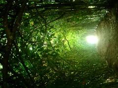 .................O (...anna christina...) Tags: nature brasil natureza annachristina annachristinaoliveira