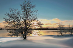 Georgian Bay Winter Sunset (Freckleface Nelson) Tags: trees winter sunset white snow ontario cold tree ice nature landscape frozen frost georgianbay scenic provincialpark infocus highquality killbear whitewinter TGAM:photodesk=winter2012