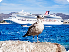 (Balzs B.) Tags: ocean cruise carnival bird water rock mexico boat cabo ship