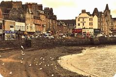 Oban (*l*a*u*r*a*) Tags: city sea urban seagulls vintage coast scotland nikon shore oban d90