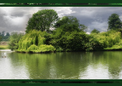 St. Albans Park XIV (Chariots_of_Artists) Tags: park uk england sky lake green nature britain ducks weepingwillow tress hertfordshire stalbanspark
