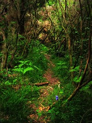 The Secret path to another Realm (Dazzygidds) Tags: england woodland wonderful exploring scenic devon ferns dartmoor bluebell atmospheric delightful westcountry harford enticing narrowpath ivybridge dartmoornationalpark secretpath pathandtrail