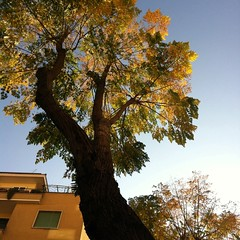 fall 2 (SS) Tags: above city november blue autumn light sky italy orange brown white house black roma tree green weather yellow square photography beige glare view angle pov walk branches year perspective roofs clear crop editing framing bianco nero lazio celeste iphone atmophere