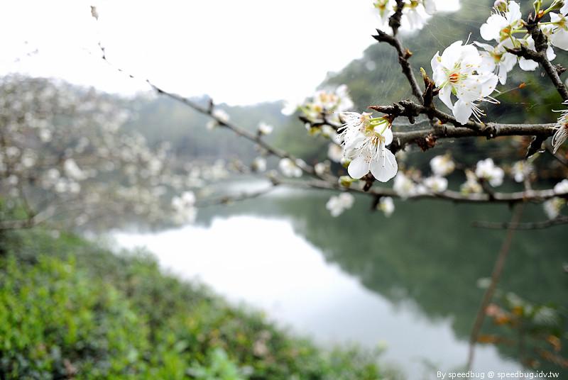 後慈湖 (33)