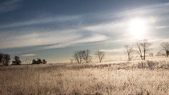 In the Here and Now (Kevin Rodde Photography) Tags: trees sky grass clouds sunrise canon frost hawk grasses prairie hollow bartlett cirrus hor 6d 24105 rodde 24105mm forestpreservedistrictofdupagecounty fpddc bartelttillinois kevinrodde hawkhollowforestpreserve kevinroddephoto kevinroddephotography