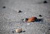 Shell 1 (afloden) Tags: shells beach norway strand no troms lyngen skjell