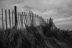 In need (Sally_Wareing) Tags: blackandwhite night fence golf sand wind sanddune ainsdale ainsdalesanddunesnationalnaturereserve