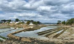 Les parcs  hutres bretons (Iris.photo@) Tags: france bretagne morbihan parc larmorbaden berder hutre ostriculture