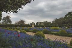 Champs de fleur (StephanExposE) Tags: cloud paris france flower tree nature fleur garden cloudy jardin nuage campagne arbre iledefrance sceaux nuageux parcdesceaux exterieur stephanexpose