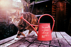 Tika (gregkitten) Tags: summer film cat 35mm xpro crossprocessed kitten fuji cross kitty phoebe 100 analogue process yashica juniper tika sensia mg1