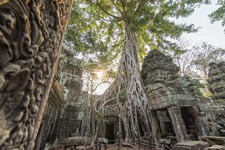 angkor - cambodge 2016 101