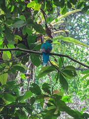"""La Réserve de Monteverde: un Quetzal Resplendissant femelle <a style=""""margin-left:10px; font-size:0.8em;"""" href=""""http://www.flickr.com/photos/127723101@N04/26945524635/"""" target=""""_blank"""">@flickr</a>"""