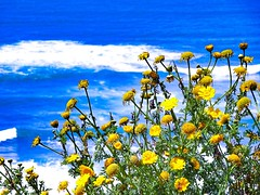 Experimenting with this one (anthonyizaguirre1234) Tags: ocean flowers flower color sandiego experimenting