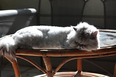 . adoration . (monika strataki (busy)) Tags: from 2 sun max cat photography persian balcony monika bathing scenes strataki