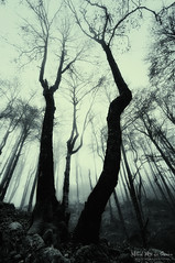 Bosque misterioso (Mimadeo) Tags: light blackandwhite white mist black tree halloween nature monochrome misty fog mystery fairytale forest dark landscape evening scary woods mood darkness magic fear foggy evil spooky fantasy rainy mysterious horror trunk nightmare twisted enchanted