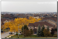 Suburbia Ablaze (Lisa-S) Tags: autumn ontario canada lisas foliage brampton invited 50d 5803 gappool copyright2011lisastokes gicno flickropen gap20111201 getty2012 getty20120309