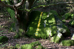 Autumn Land Art (JRT Pickle) Tags: autumn sculpture leaves rock leaf moss maple october lancashire lancaster ephemeral landart naturalart enviro 2011 clougha birkbank enviroart julialandartmapleleaflineonmossyrockbirkbankseptember julialandartmapleleaflineonmossyrockbirkbankseptember2011