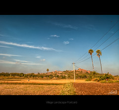 village landscape (swarat_ghosh) Tags: india landscape nikon village bluesky fields crops 1855mm hyderabad palmtress cropland ruralindia d3000 shamirpet swaratghoshphotography indianvillagelandscape