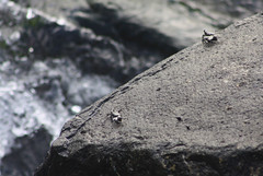 IMG_2140 (stevefenech) Tags: travel sea sun beach water sport visions sand surf extreme scuba diving stephen adventure tropical caribbean portfolio lesser tropics fenech antilles caribe dominica roseau