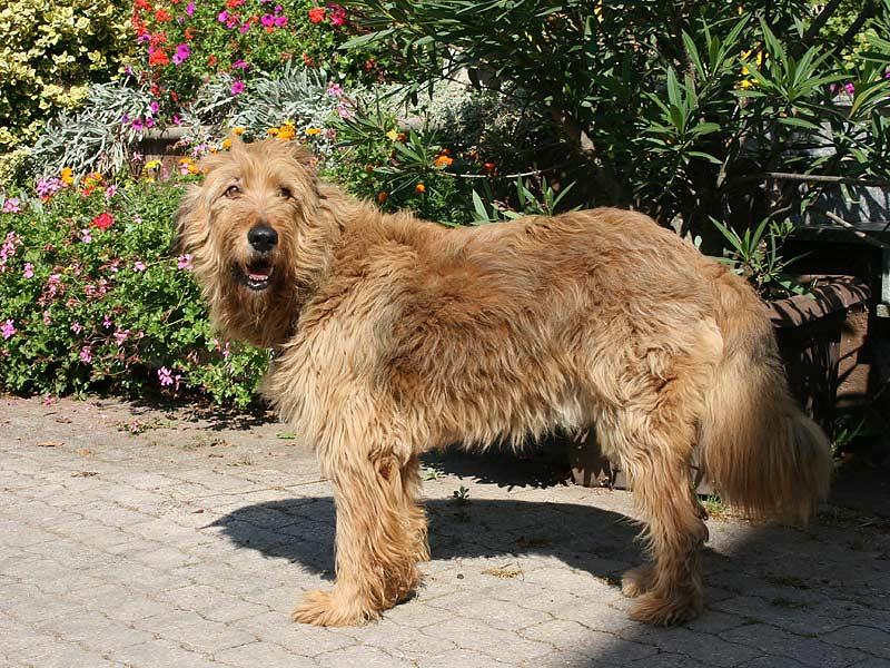 Ferienhof Hausmann - Hund