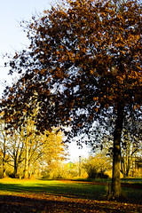 """Autzen Afar"" taken for ODC - A Photo Walk Shot (aimsnapclick) Tags: autumn fall oregon nikon eugene challenge autumnal oregonducks odc autzen pac12 nikkor35mmf18g ourdailychallenge challengegroups nikond3100 ourdailychallengegroup3 odcg3 pac12conference pacific12conferencechampionshipgame"