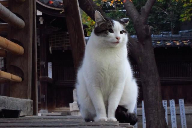Today's Cat@2011-12-06