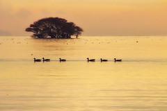 The early winter sunset view of Lake Biwa * (HarQ Photography) Tags: winter japan sigma lakebiwa sd15 18200dcos