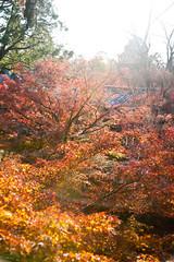 KYOTO DAYS ~ Tofuku-ji Temple 東福寺 (junog007) Tags: autumn light red color japan temple nikon kyoto tofukuji 28300mm autumnalleaves higashiyama d700 mygearandme