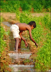 The Farmer's Son (puzzlescript) Tags: india grass nikon son farmer framing kesari ravigopal