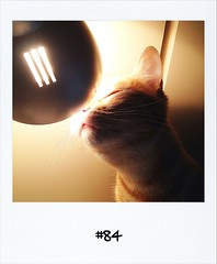 """#Dailypolaroid 22-12-11 #84 #fb • <a style=""""font-size:0.8em;"""" href=""""http://www.flickr.com/photos/47939785@N05/6565702413/"""" target=""""_blank"""">View on Flickr</a>"""