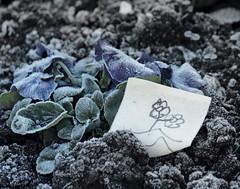Flores. (Ese desuwus.) Tags: flores flor infantil invierno papel dibujo frio hielo suelo tierra congelar escarchar