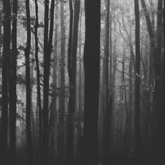 Mirkwood... (integrity_of_light) Tags: autumn trees fog forest dark lost mirkwood